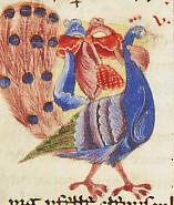 Pavone - Codex 20, Bibbia, XIII sec. - Cava dei Tirreni, Abbazia della SS. Trinità, Biblioteca Abbaziale.