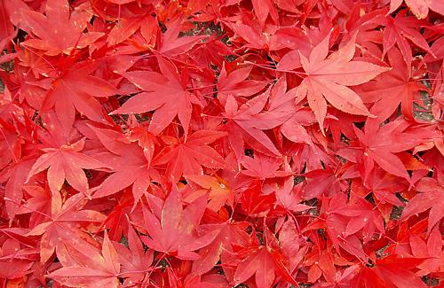 foglie-rosse.jpg