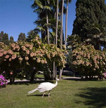 giardini-1.jpg