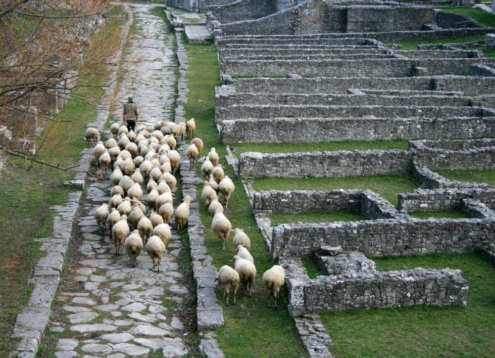 altilia-pastore-pecore-foto-michela-ciamarra.jpg